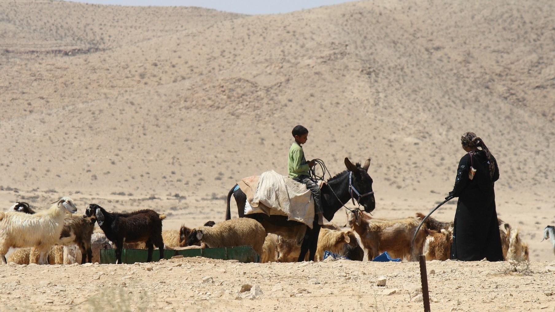 The Bedouin in Israel (2017)